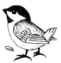 garden-bird